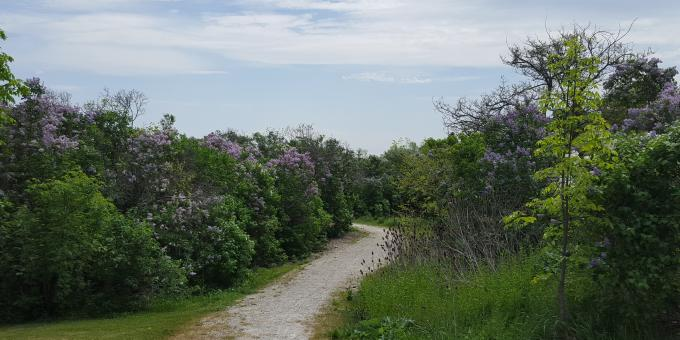 The famous Georgian Trail runs by the Craigleith Heritage Depot.