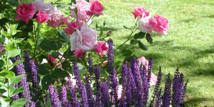 Les jardins d'Osgoode Hall