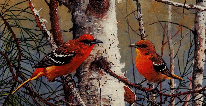 Baltimore Oriole painting by Vic Gibbons