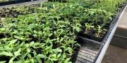 Adult Workshop - Growing Indoor Seedlings